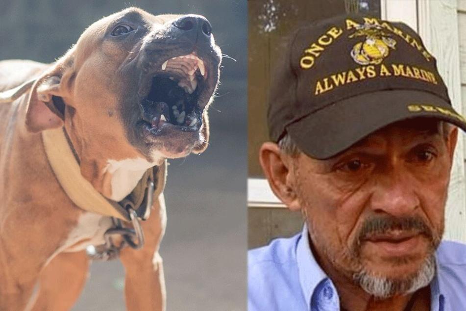 Besitzer sieht sich im Recht: Drei Hunde zerfleischen Jungen (†16) brutal zu Tode