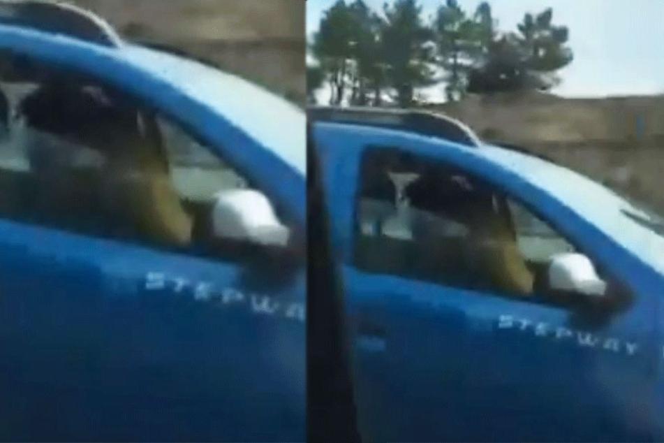 Eimn Fahrer filmte ein Pärchen beim Sex am Steuer während der Fahrt - auf der Autobahn.