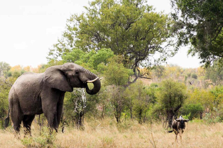 Der Naturschutz in Afrika hat es dem 66-Jährigen angetan. (Symbolbild)