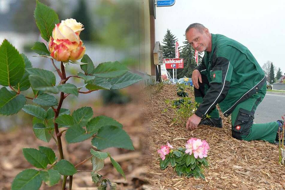 Nahkauf: Huch, wer klaut da ständig unsere Rosen?