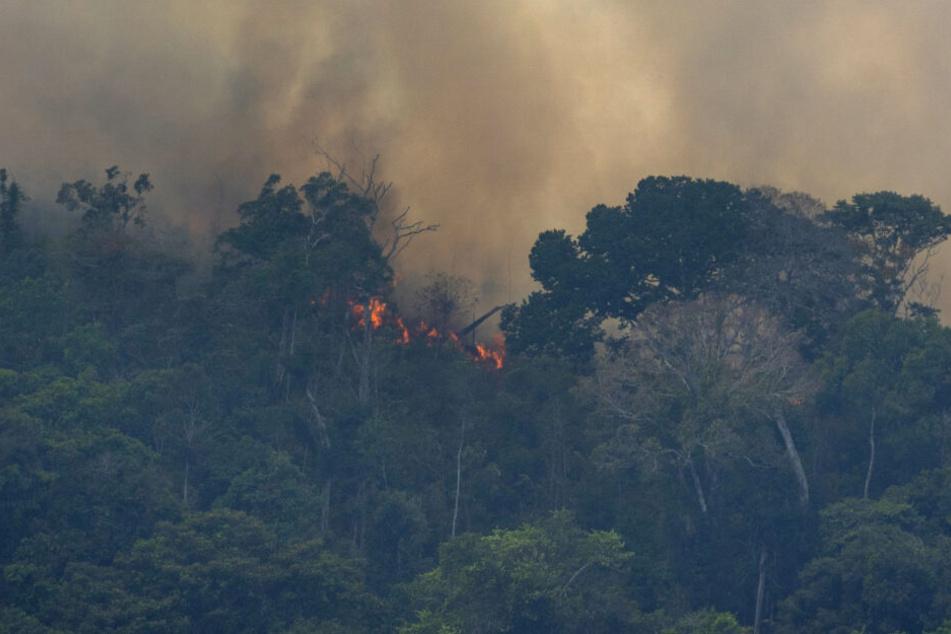 Feuer und Rauch, so schaut es momentan an sehr vielen Orten im Amazonas aus.