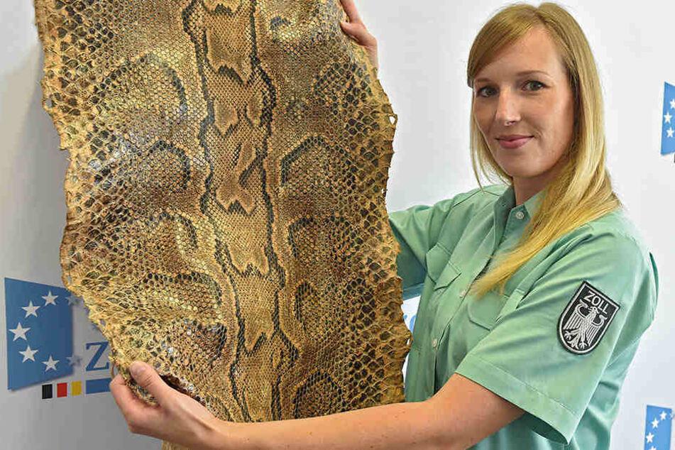 Zollinspektorin Julia Marek (29) mit der Pythonhaut, die ein Urlauber im Reisegepäck verstaut hatte.