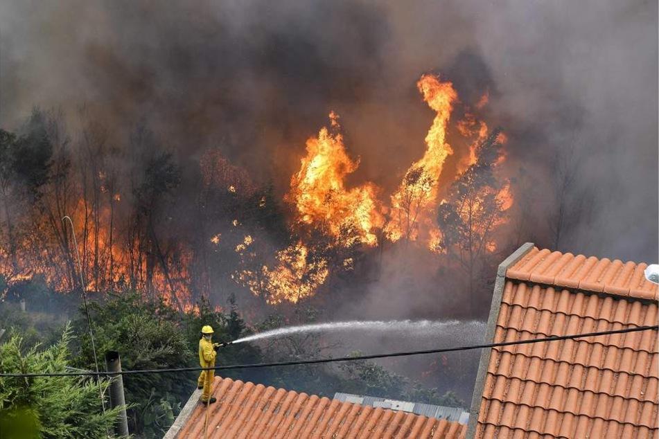 Die Brände haben inzwischen auch die Hauptstadt Funchal erreicht.
