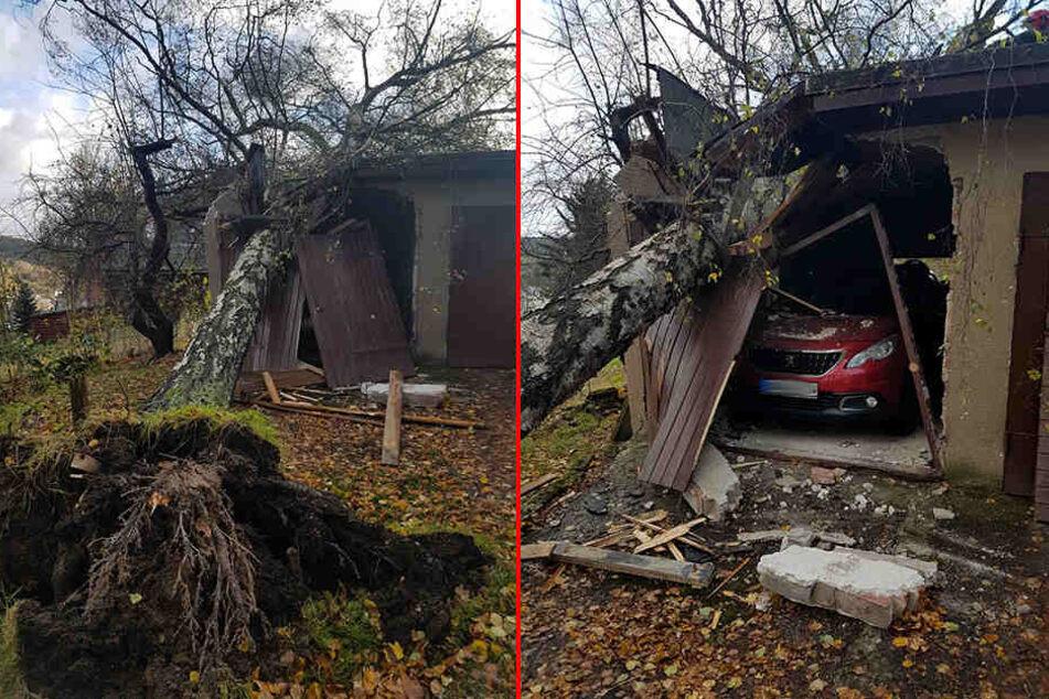 In Schönheide ist eine Birke auf eine Garage gestürzt und hat große Schäden angerichtet.