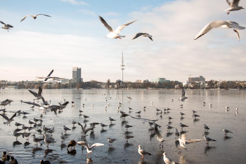 Die Zahlen der Corona-Infektionen in Hamburg nehmen ab.