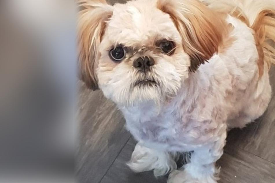 Geliebter Hund und Besitzer sind dank Teenagern wieder vereint