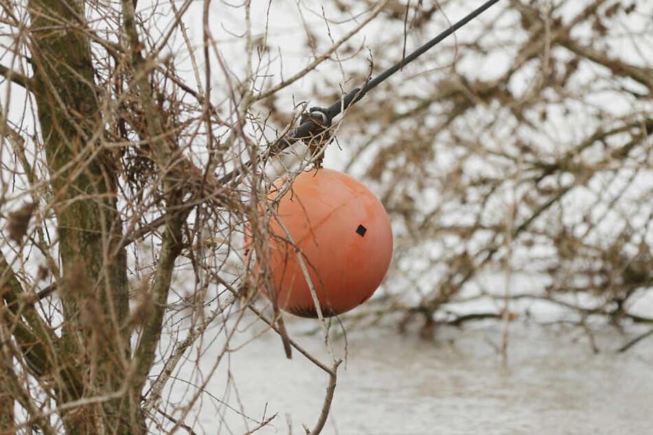 Ein abgerissenes Hochspannungs-Blitzableiterkabel hängt in einem Baum über den Rhein.