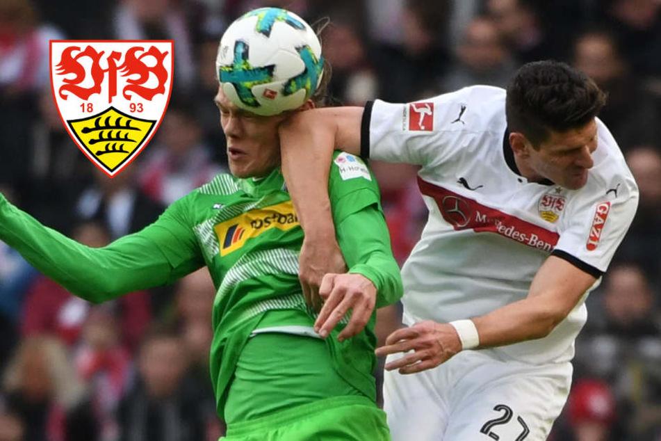 1:0 für den VfB: Ginzek veredelt Korkuts Heimdebüt