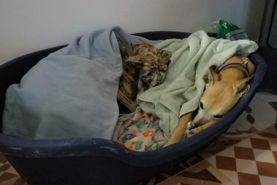 Mittlerweile lebt Matilda, die nun Dizzy heißt, in einer neuen Familie. Dort geht es ihr sichtlich gut.
