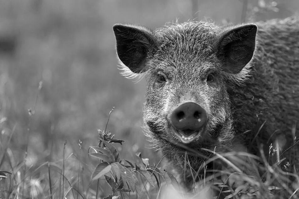 Tödliche Jagd: Sohn verwechselt Vater mit Wildschwein