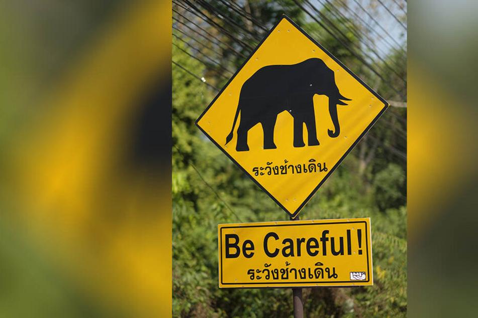 Deutscher bei Fahrradtour in Thailand von Elefanten angegeriffen