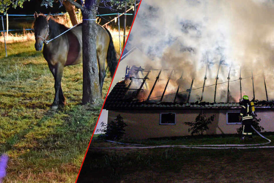 Dramatischer Brand bei Kamenz: Pferd stirbt bei Feuer in Stall