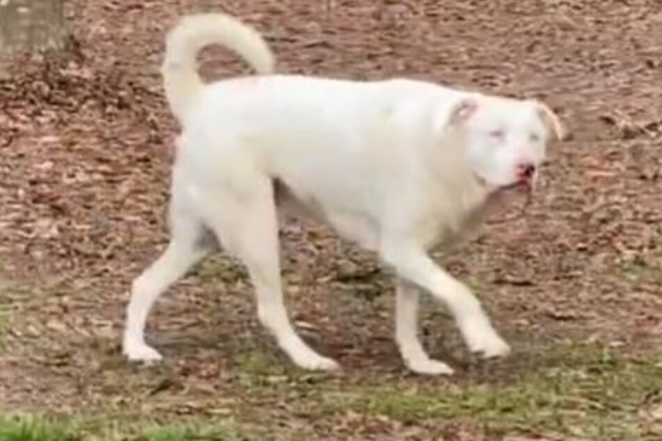 Follow your nose: blind dog catches her owner's scent and jumps for joy!