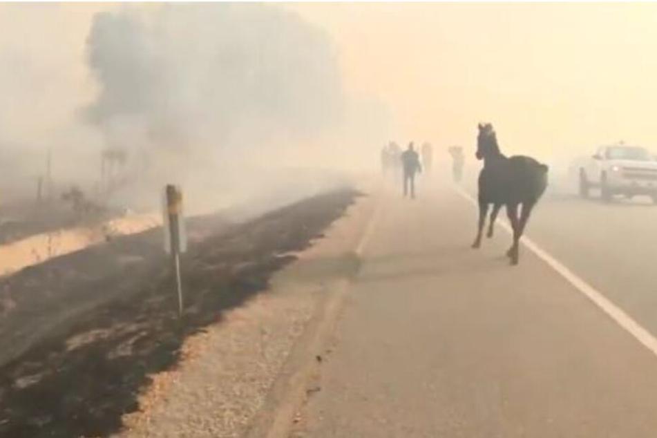 Pferd rennt zurück in Feuerhölle, um Artgenossen zu retten