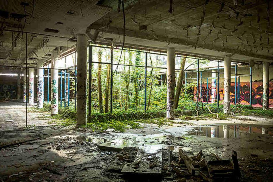 Verfallen und überwuchert: So sieht es aktuell auf dem Gelände des einstigen DDR-Gästehauses aus.