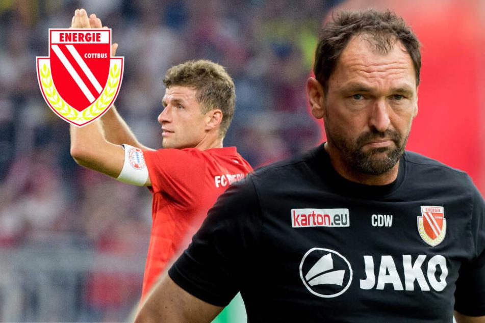 """""""Keine Chance!"""" Energie-Trainer Wollitz glaubt nicht an Pokal-Wunder gegen Bayern"""
