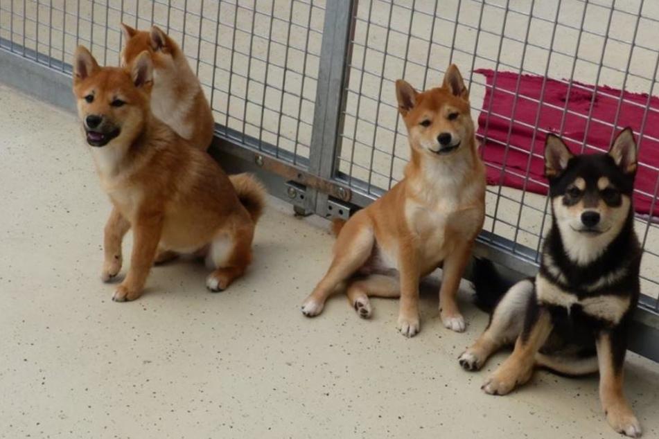 Die vier Welpen sind zurzeit im Tierheim untergebracht.