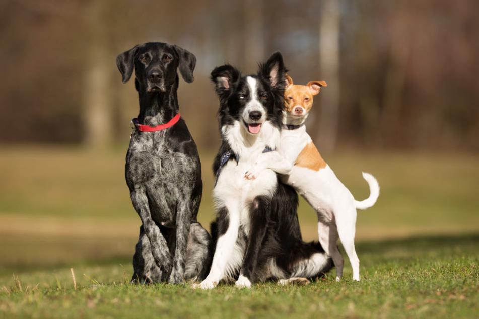 Wuff: Mittlerweile leben 14000 Hunde in Dresden, deutlich mehr als noch vor zehn Jahren.