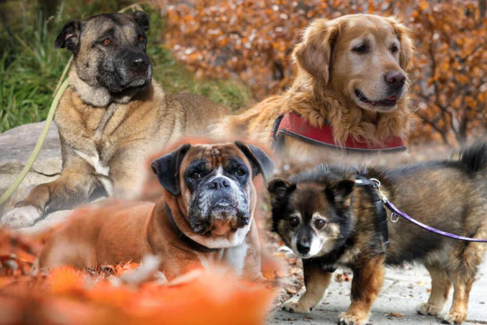 Alt und alleine: So viele Hunde-Opas sitzen im Tierheim