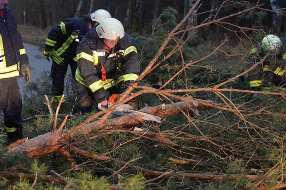 Einsatzkräfte müssen nun die Wälder sicher machen. (Symbolbild)