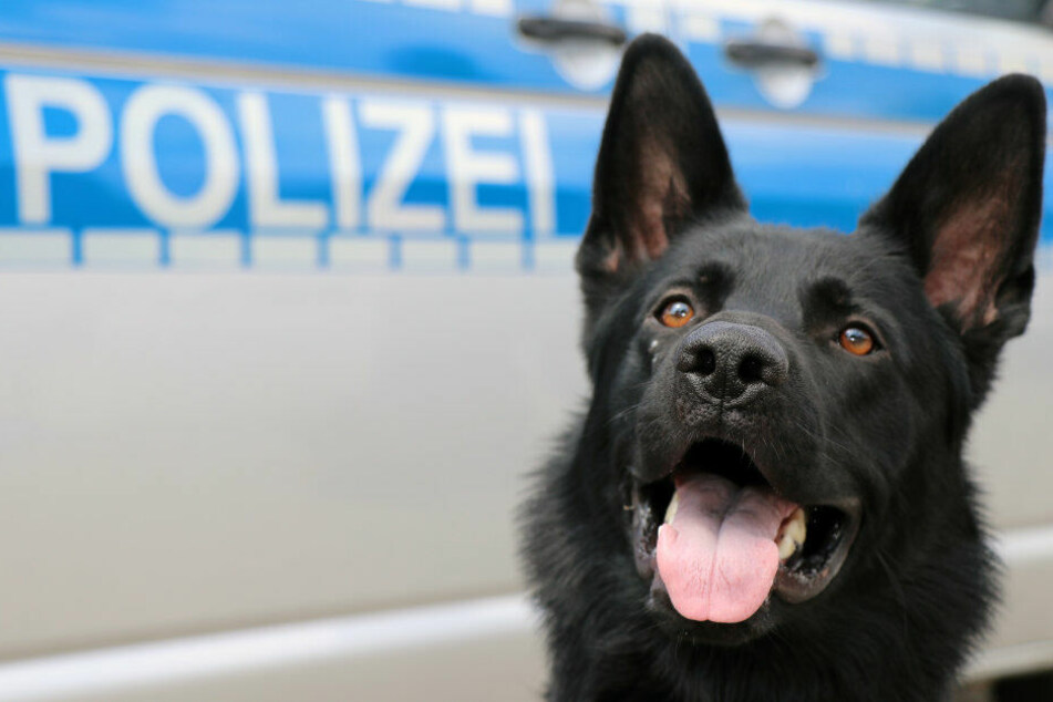 Dank Drogenspürhund Ulla konnte der Kurier dingfest gemacht werden.