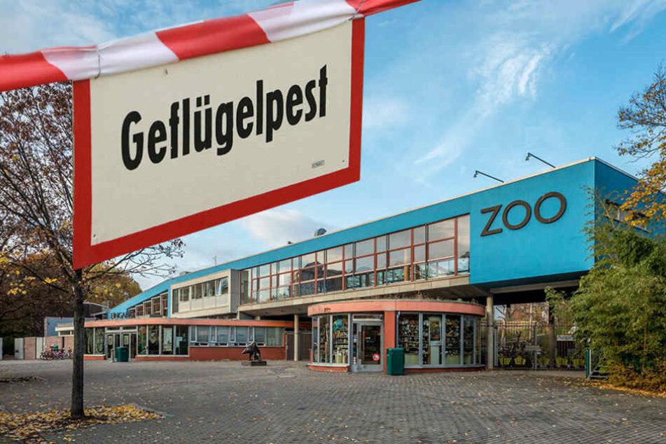 Verdacht bestätigt! Muss Dresdner Zoo jetzt wegen Vogelgrippe schließen?