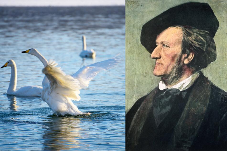 In Richard Wagners Lohengrin spielt der Schwan eine tragende Rolle.