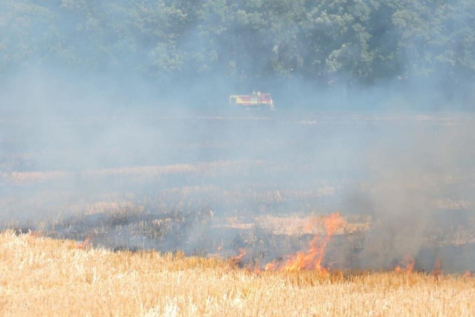 Am Waldrand versuchen die Kameraden, die Flammen von den Bäumen fernzuhalten.