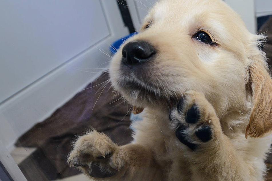 Welpen qualvoll gehalten: Berufsverbot für Tierärztin