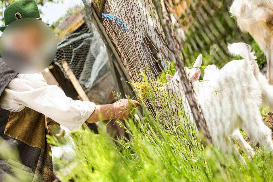 Ein Ziegenbauer aus Wörrstadt-Rommersheim hat die Castings nicht gemeistert... Ist er zu kritisch?