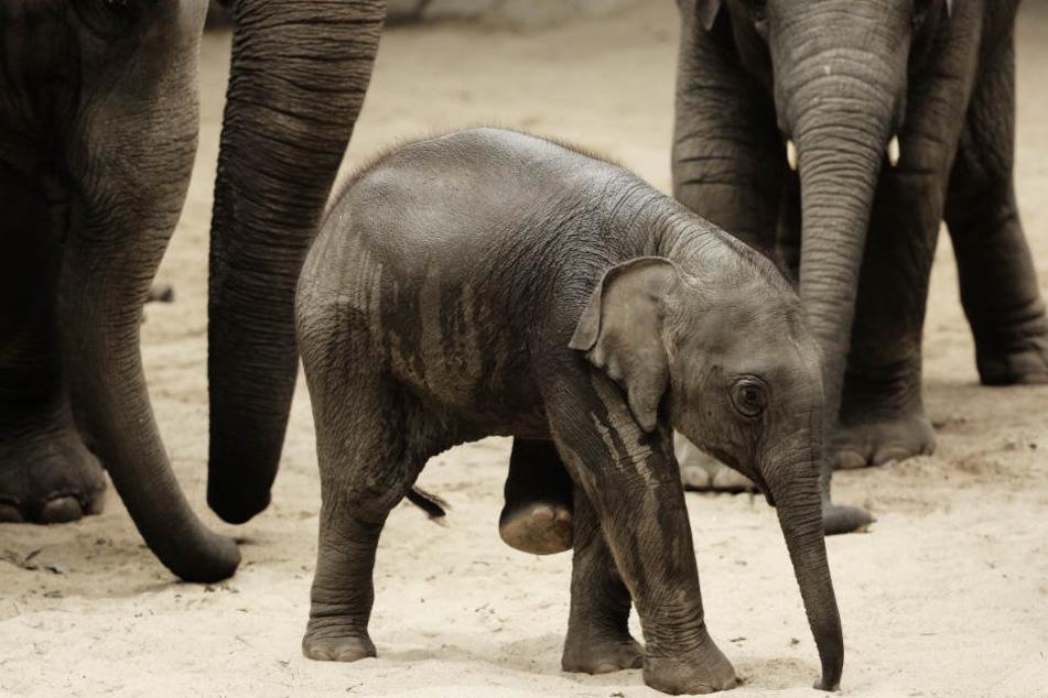 Nach Tod von Elefanten: So geht es im Tierpark Hagenbeck weiter