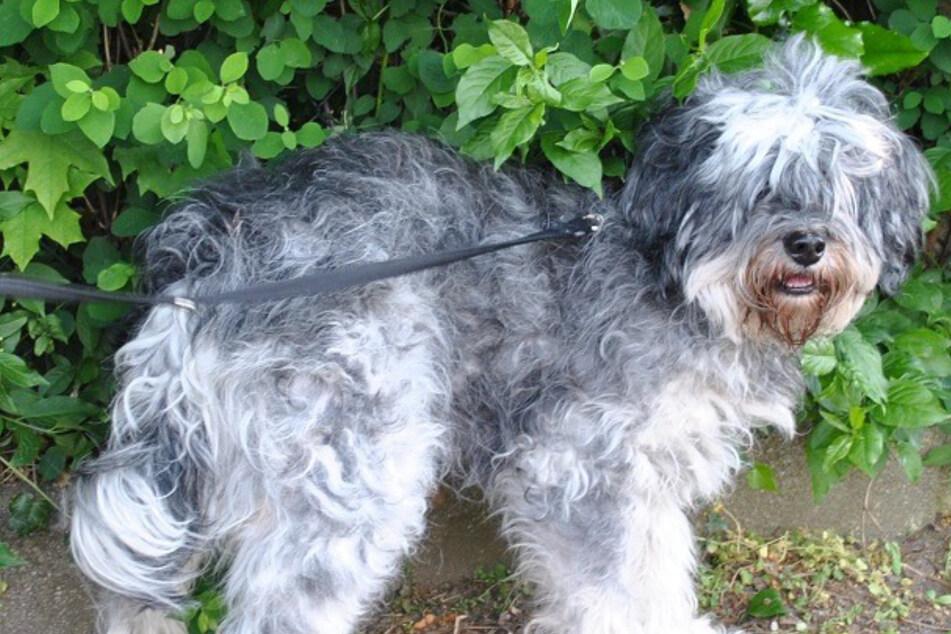 Traurige Entdeckung: Verwahrloster Hund vor Tierheim ausgesetzt