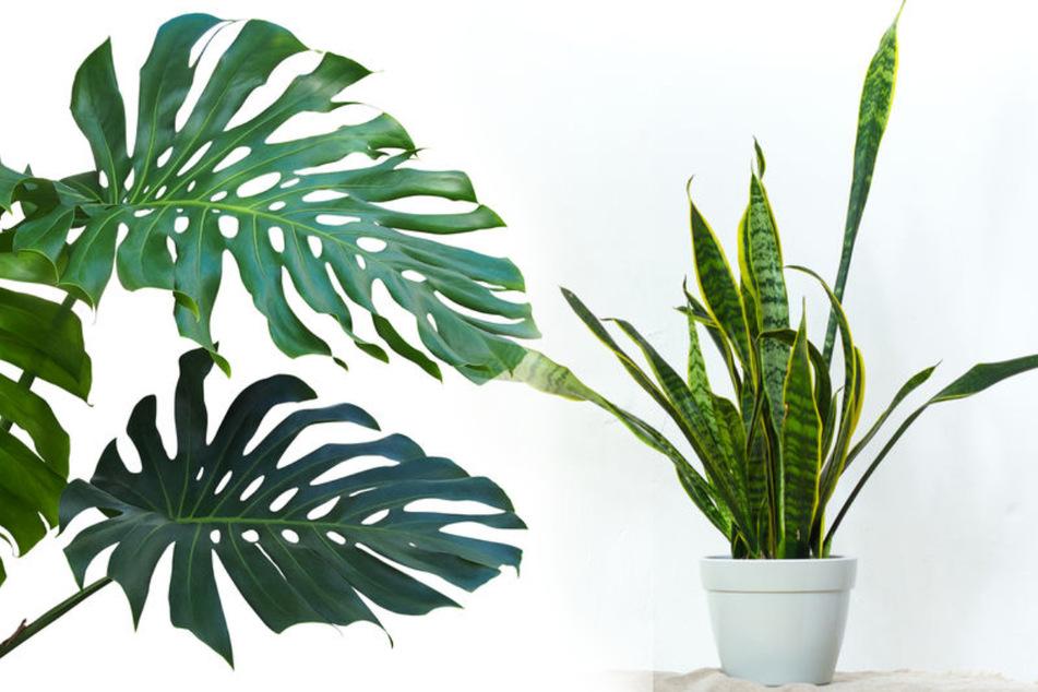 Kein Grüner Daumen? Diese sechs Zimmerpflanzen gedeihen trotzdem!