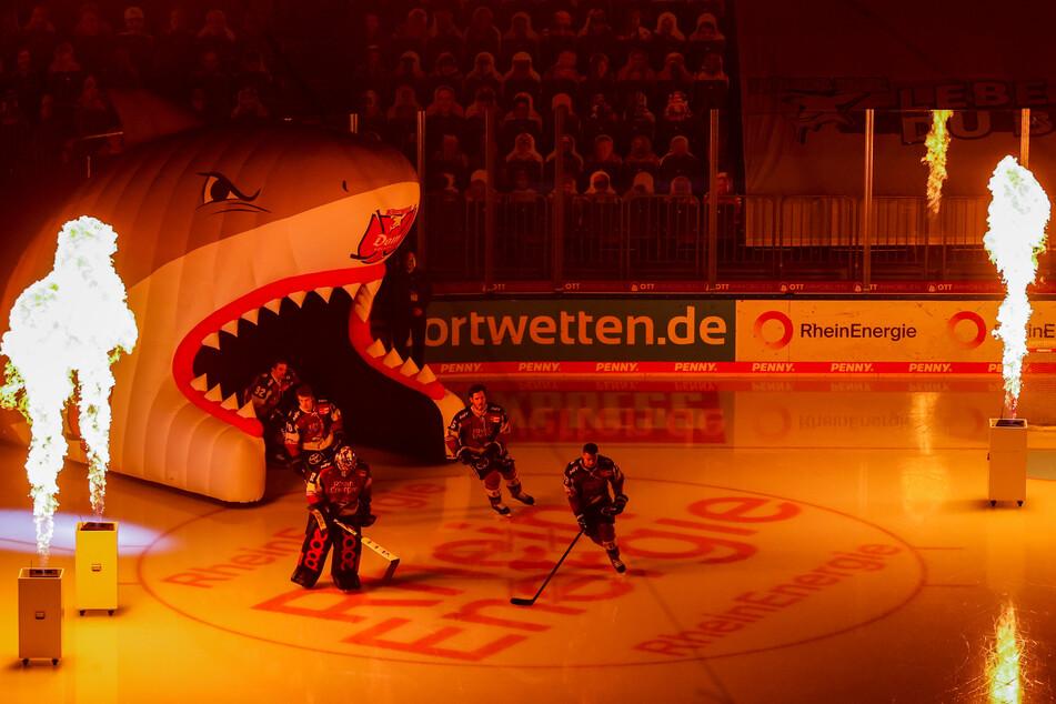 Noch alles drin: Bei noch acht ausstehenden Partien liegen die Kölner Haie aktuell nur drei Punkte hinter dem Tabellenvierten Grizzlys Wolfsburg. (Archivfoto)