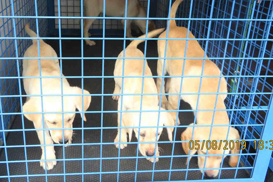 Ein relativ kleiner Käfig ist keine angemessene Behausung für gleich vier Hunde.