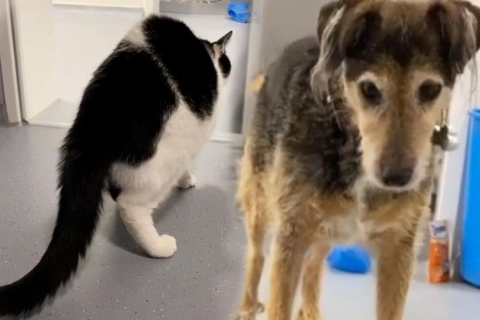 Dem Terrier Lupo ist das Verhalten der Katze nicht ganz geheuer.