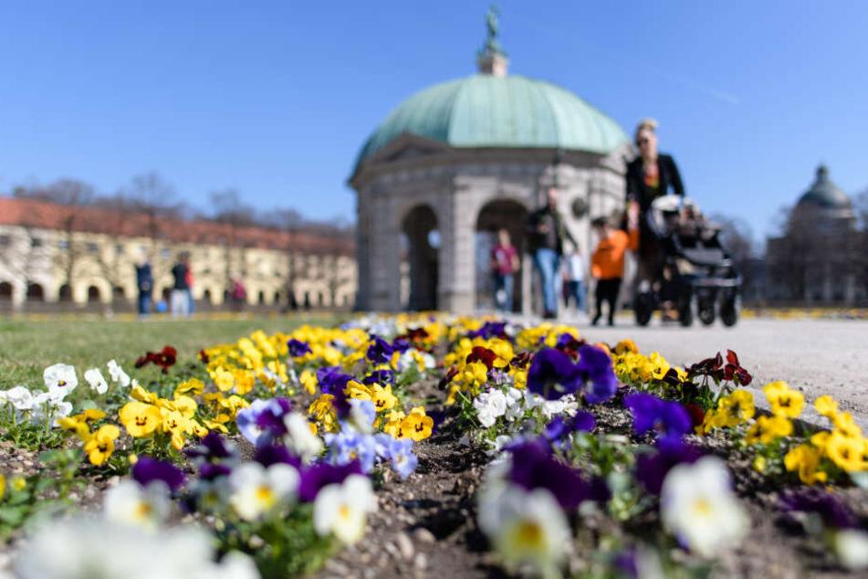 Im Hofgarten konnte man am Wochenende bei herrlichem Sonnenschein spazieren gehen.