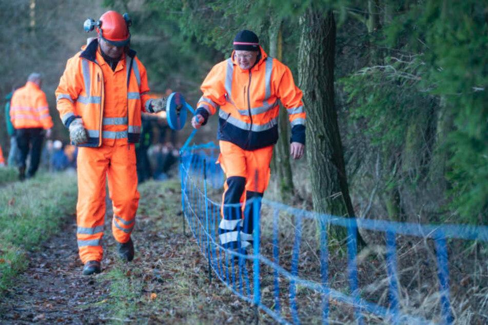 Seuchenalarm! Sachsen baut Schutzzaun wegen Schweinepest