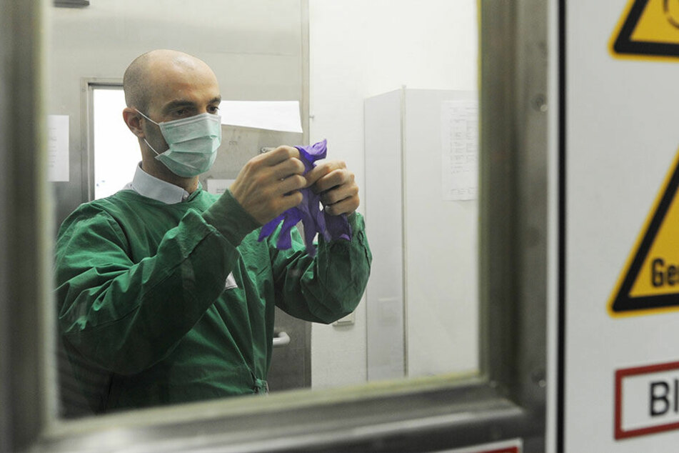 Gefährlicher Erreger: Hanta-Virus auch bei uns immer häufiger