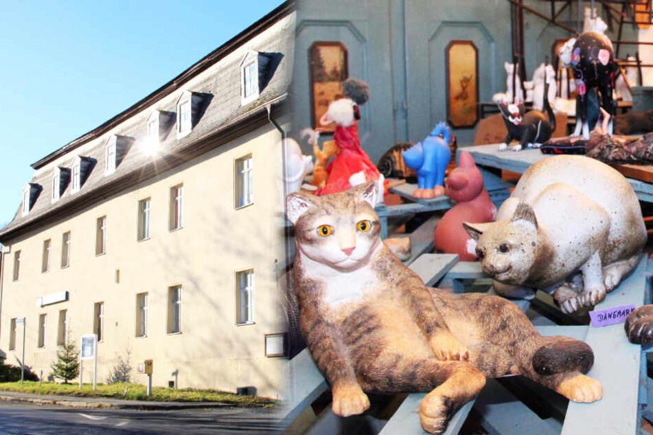 Das ist Deutschlands größtes Katzen-Museum!