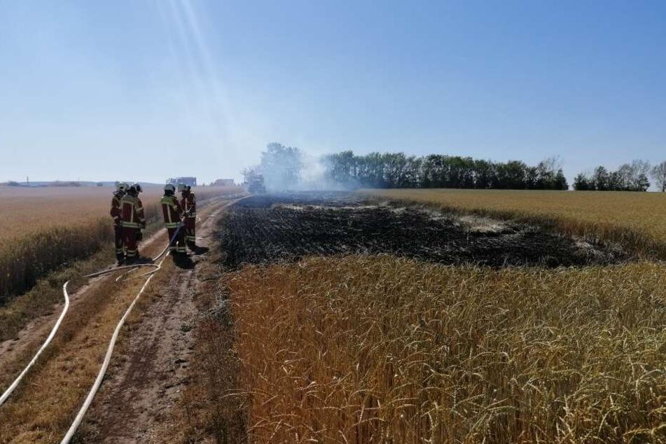 Die Feuerwehr löschte das Feld.