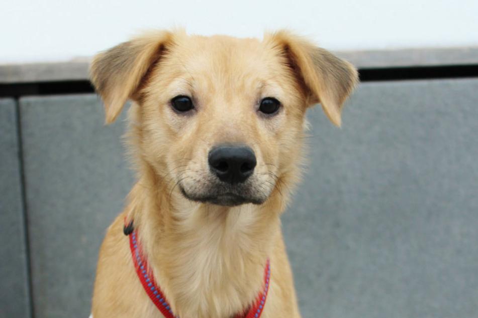 Im Tierheim kann man Pate für alle Tiere oder zum Beispiel speziell für Hunde werden.