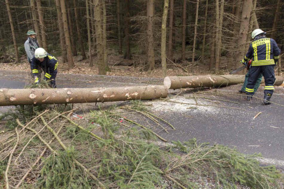 Bäume entwurzelt, Stromleitung gerissen: Sturm wütet in Sachsen