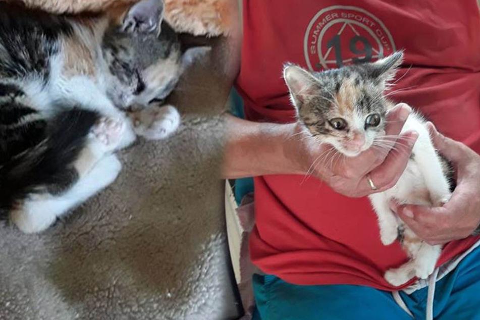 Unfassbar grausam! Süße Babykatzen einfach aus dem Auto geworfen