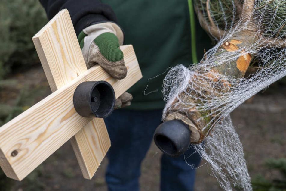 """Steffen Uhligs Service bei kleineren Bäumen: praktische Holzständer inklusive. """"Besonders beliebt bei älterer Kundschaft oder Leuten, bei denen es schnell gehen muss."""""""