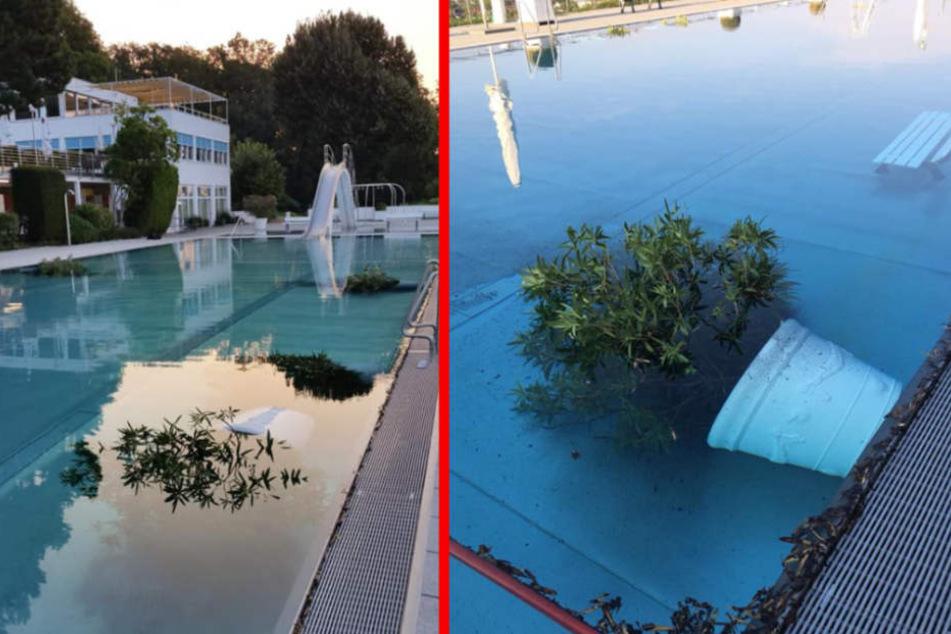 Die Täter versenkten Pflanzenkübel und Bänke in dem Schwimmbecken.