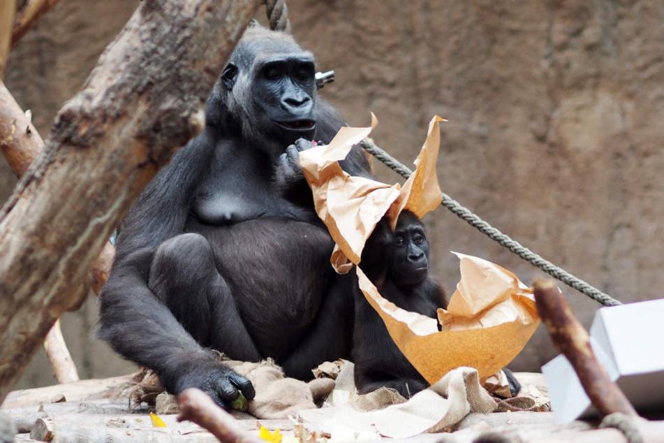 Geburtstagskind Kio zusammen mit seiner Mama Kumili.