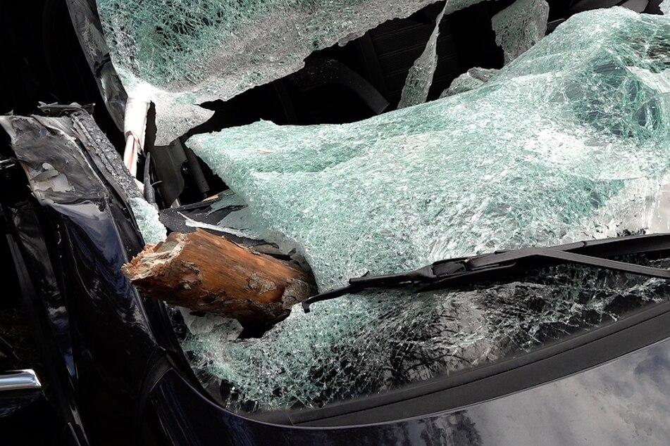 Die Äste des Baums durchbohrten die Windschutzscheibe des Autos.