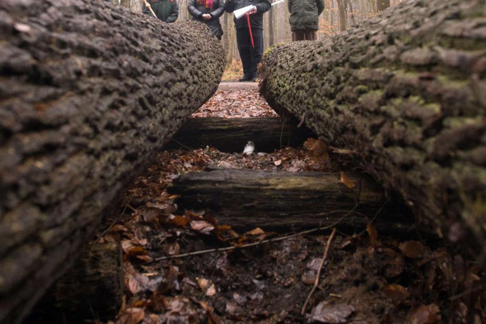 Der Besitz einer privaten Waldfläche könnte auch heute schon zum Minusgeschäft werden. (Symbolbild)