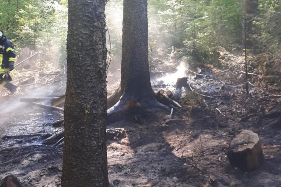 In Waldstück Feuerstelle errichtet: 30 Quadratmeter fackeln ab!